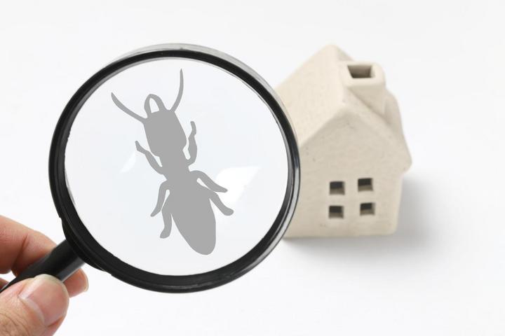 シロアリや木材腐れに負けない家の秘密セミナー